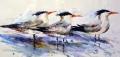 2016 Tern Tern Tern, 15x30 sm